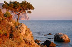 Pine wood on cliff while sea sundown Stock Photography