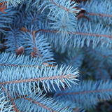 Pine-wood Royalty Free Stock Images
