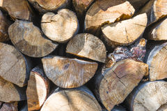 Pine wood Stock Image