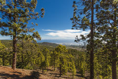 The pine wood in the mountain district Royalty Free Stock Photos