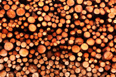 Pine Wood Pile Stock Image