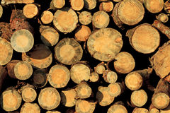 Pine wood piles stacked. Texture, logging deforestation Stock Images
