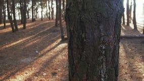 Pine Wood Pillar in the Movement Around stock video