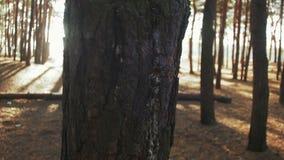 Pine Wood Pillar in the Movement Around stock footage