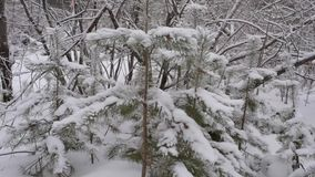 Wood in the snow stock video footage