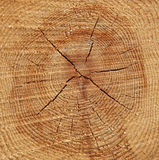 Pine Wood Tree Rings Background Royalty Free Stock Photos