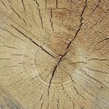 Pine Wood Tree Trunk Cross Section Texture Close Up Royalty Free Stock Image