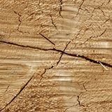 Pine Wood Tree Trunk Cross Section Texture Close Up Stock Photos