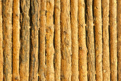 Pine wood wall Stock Photos
