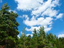 Pine Woodlands - Michigan Stock Photos