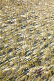 Pine woodlands, top view Stock Photos