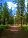 Pine Woods Drive. Traveling through the Ponderosa pines on Riverside Road near Camp Sherman, OR stock photography