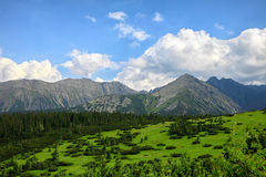 Pine woods, green grass and mountain range at the background Stock Photos