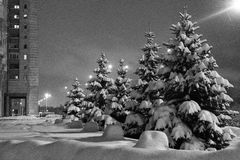 Pine world. Few pines in monochrome city Stock Photography