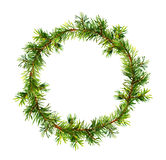 Pine wreath - spruce tree branches. Watercolor Royalty Free Stock Photo