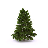 Pine1 Stock Images