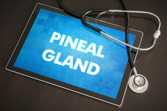 Pineal gland (endocrine disease related) diagnosis medical conce Stock Photos