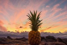 Pineaple Sitting on the Rocks at Sunset in Maui Hawaii royalty free stock photos