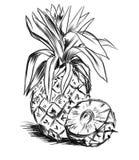pineaple skissar Arkivbild