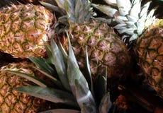 Pineappels Fotografia de Stock