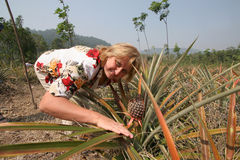 Pineapple. Woman on plantation pineapples in Thailand Royalty Free Stock Photo