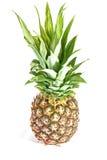 Pineapple Royalty Free Stock Photos