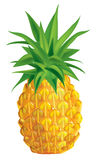 Pineapple. Vector illustration of ripe pineapple Royalty Free Stock Photos