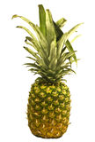 Pineapple. A pineapple isolated on a white background Stock Photos