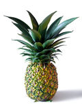 Pineapple. Isolated in a white background Royalty Free Stock Photo