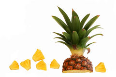 Free Pineapple Royalty Free Stock Photos - 15867448