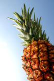 Pineapple. With blue backdrop stock image