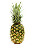 Pineapple. A single pineapple on a white background Stock Image