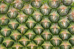 Pineapple. (ananas) skin close up. Texture Stock Images