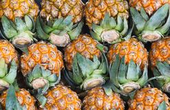 Pineapple. Nang-lae pineapple. tropical fruit in asia Royalty Free Stock Image