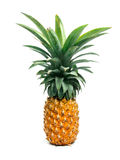 Pineapple. Beautiful pineapple isolated on white background with shadow royalty free stock images