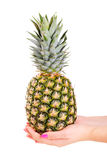 Pineapple Royalty Free Stock Photography