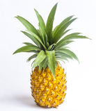 Pineapple. Fresh pineapple isolated on a white background Royalty Free Stock Photography