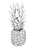 Pineapple. Black and white illustration of a pineapple Stock Photography