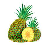 Pineapple. A Digital pineapple, perfect to be used on label, brochure, etc Stock Photo