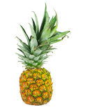Pineapple. A single pineapple standing against a white background stock photos