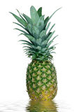 Pineapple. An isolated pineapple on water Stock Photography