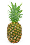 Pineapple. Isolated on white background Stock Image