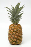 Pineapple. Against a white background Stock Image