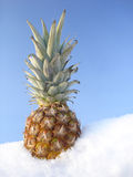 Pineapple. In snow Stock Image