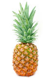 Pineapple. Fresh ripe pineapple isolated on white royalty free stock image