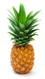 Pineapple 6 Stock Photo