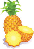 Pineapple. The Vector illustration - ripe pineapples Royalty Free Stock Images
