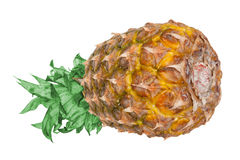 Pineapple. Fresh pineapple on a white background Royalty Free Stock Images