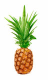 Pineapple. A whole ripe pineapple on a white background Stock Photos