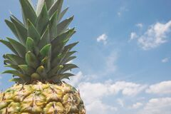 Pineapple against blue skies Stock Images